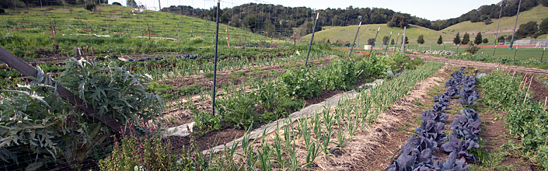 Indian Valley Organic Farm and Garden